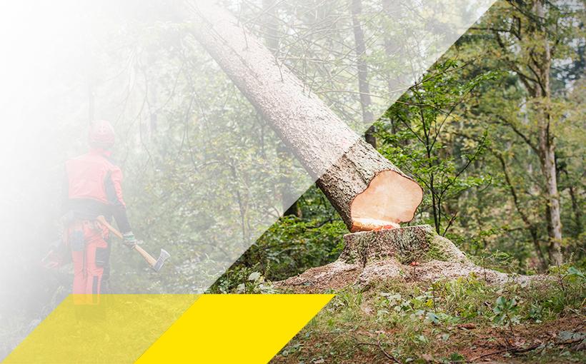 Baumfäller mit fallendem Baum