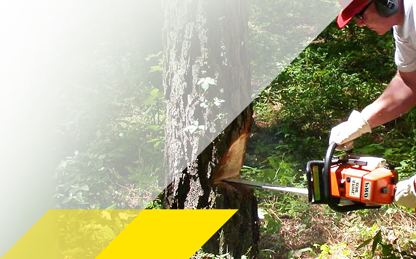 Forstwirt beim Baum fällen