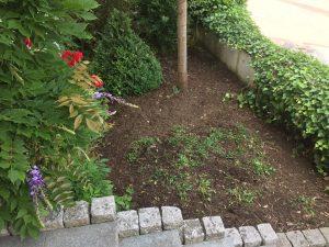 Unkraut im Garten entfernt