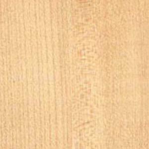 Textur von Ahorn Holz