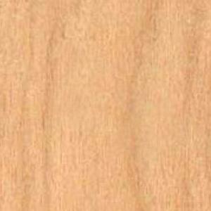 Textur vom Holz der Birke