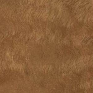 Textur vom Holz des Eukalyptus